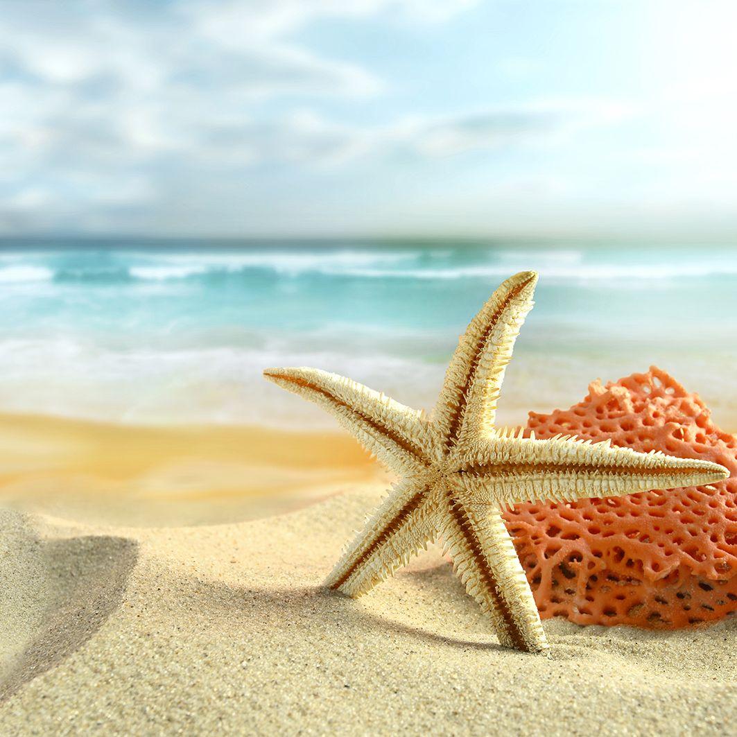 رائف يكتشف نجوم البحر