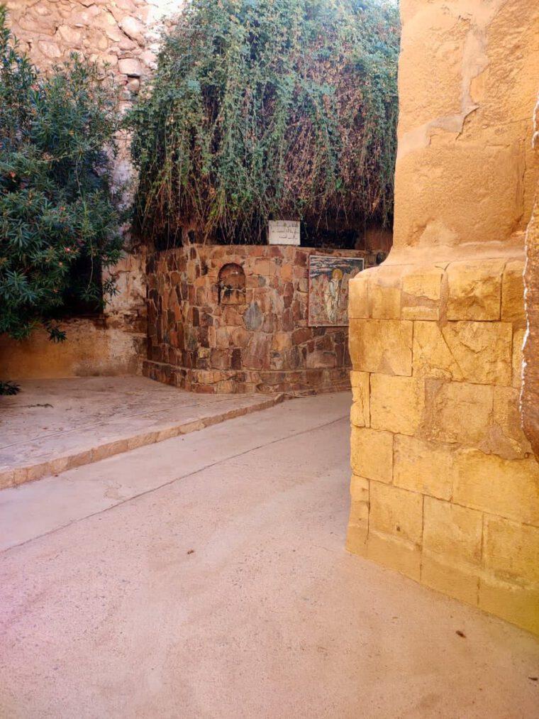 شجرة العليقة وقصة سيدنا موسى